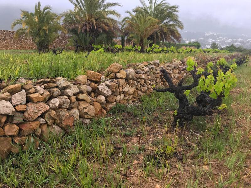 muro de piedra seca